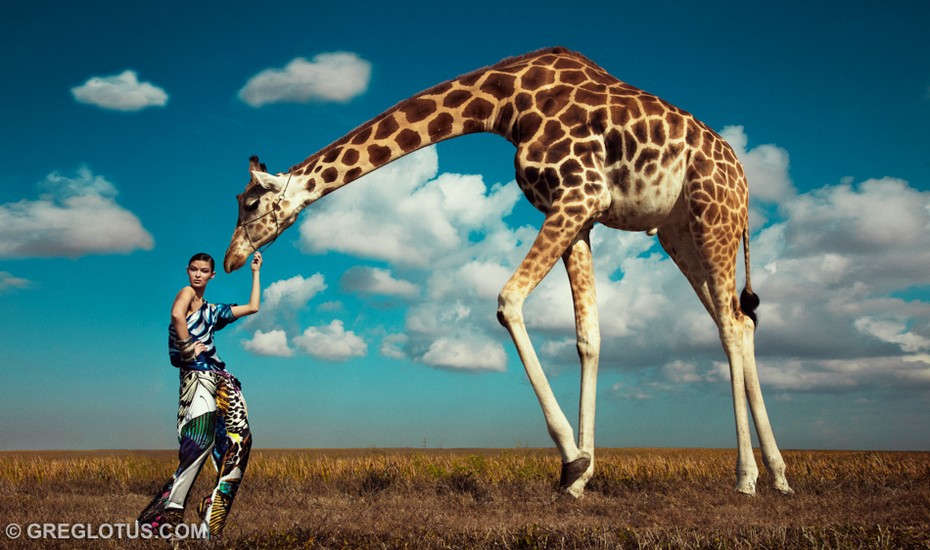 grazing giraffe